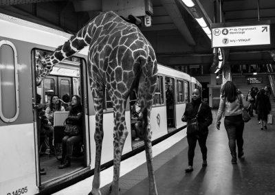 Animétro-Girafe